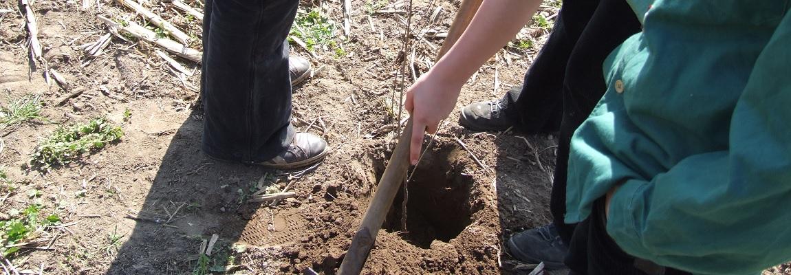 Pflanz einen Baum - schütz das Klima!